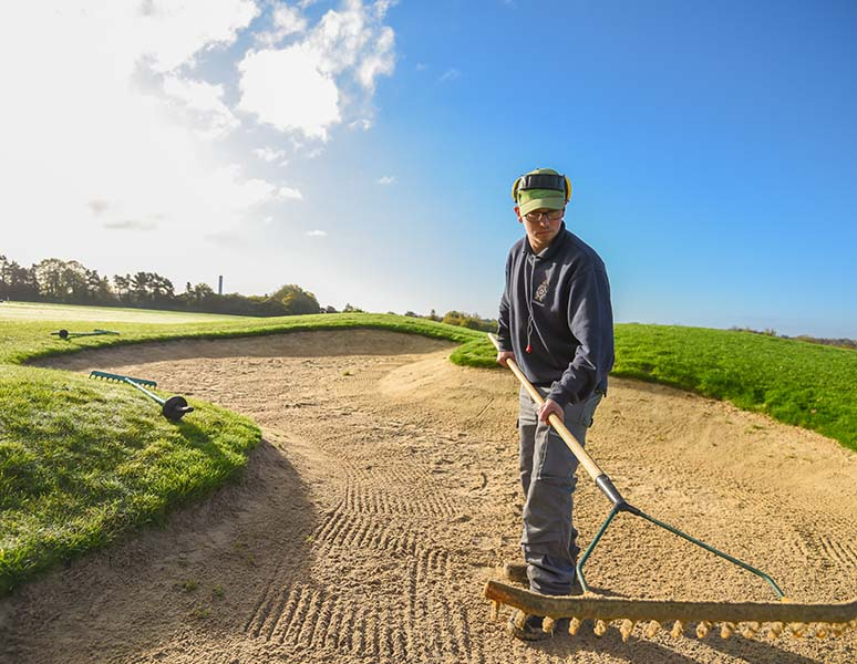 Raking bunkers at Royal Norwich